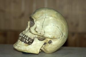 What kind of schooling would I need to become a forensic anthropologist?