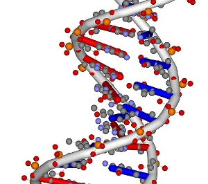 forensics science tool dna essay example View and download forensics and dna essays examples also discover topics, titles, outlines, thesis statements, and conclusions for.