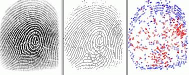 Fingerprint Identification Points