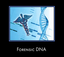 dna in forensic science How does forensic identification work any type of organism can be identified by examination of dna sequences unique to that species.